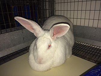 Other/Unknown Mix for adoption in Mission Viejo, California - Chiffon