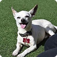 Adopt A Pet :: Mac - Denver, CO
