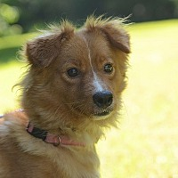 Terrier (Unknown Type, Small) Mix Dog for adoption in Siler City, North Carolina - Andy