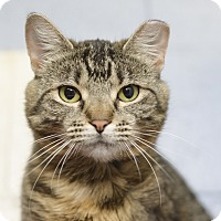 Adopt A Pet :: Sweetie - Whitehall, PA