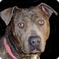 Adopt A Pet :: Tiff - Ruidoso, NM