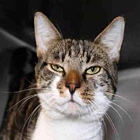 Adopt A Pet :: OAKLAND - Hampton Bays, NY