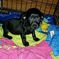 Adopt A Pet :: Bernadette - Pearland, TX