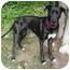 Photo 2 - Great Dane Mix Dog for adoption in Upland, California - Kaya