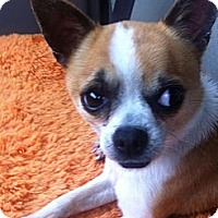 Adopt A Pet :: Nemo - Vancleave, MS