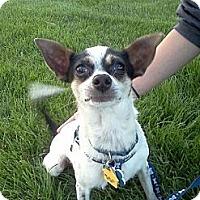 Adopt A Pet :: Louie - Commerce City, CO