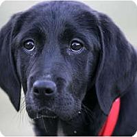 Adopt A Pet :: Cola - Denver, CO