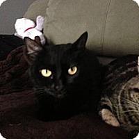 Adopt A Pet :: Sisy - Monroe, GA