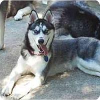 Adopt A Pet :: Hera - Madison, WI