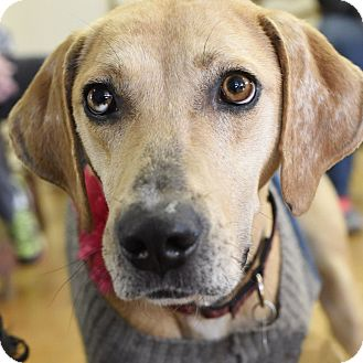 Hound (Unknown Type) Mix Dog for adoption in Knoxville, Tennessee - Lana