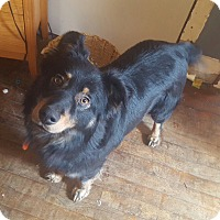 Adopt A Pet :: George-Obedience Trained - Hazard, KY