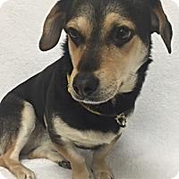 Adopt A Pet :: Sid - Mission Viejo, CA