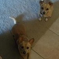 Adopt A Pet :: Katie and Doc - Scottsdale, AZ