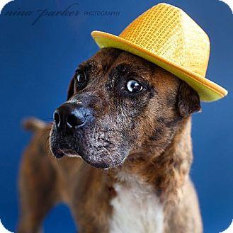 Hound (Unknown Type)/Boxer Mix Dog for adoption in Marietta, Georgia - Pepper