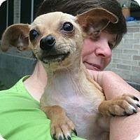 Adopt A Pet :: Okinawa - San Antonio, TX