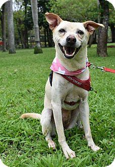 Labrador Retriever/Shepherd (Unknown Type) Mix Dog for adoption in Castro Valley, California - Barnee