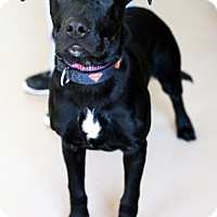 Adopt A Pet :: Captain - Appleton, WI