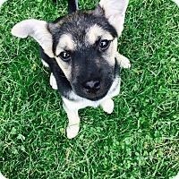 Adopt A Pet :: Stanley- Pending Adoption- - Columbus, OH