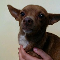 Adopt A Pet :: Wilma - Chico, CA