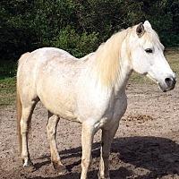 Adopt A Pet :: Sassy - Southwest Ranches, FL