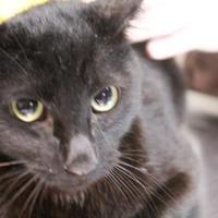 Adopt A Pet :: CALVIN - Daytona Beach, FL
