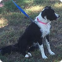 Adopt A Pet :: Tess - Greeley, CO