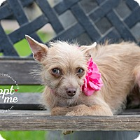 Adopt A Pet :: PIXIE - Inland Empire, CA