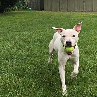 Adopt A Pet :: Donnie - Hackettstown, NJ