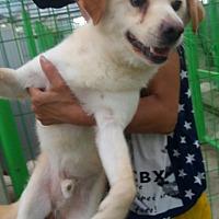 Adopt A Pet :: Globlue - Oakton, VA