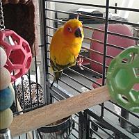 Adopt A Pet :: Vinnie - Villa Park, IL