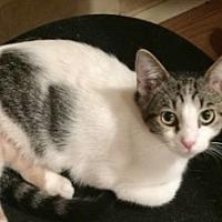Adopt A Pet :: Bernadette - Colorado Springs, CO