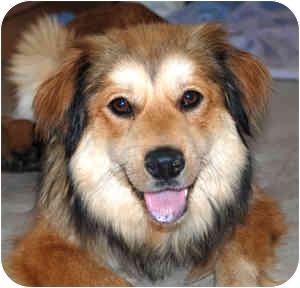 Collie Mix Dog for adoption in Cincinnati, Ohio - Bella