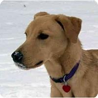 Adopt A Pet :: Tramp - kennebunkport, ME
