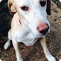 Adopt A Pet :: Reginald - Lewisville, IN