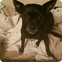 Adopt A Pet :: Princess - Golden Valley, AZ