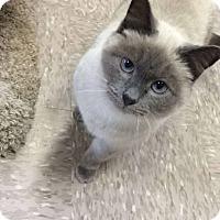 Adopt A Pet :: Samantha - Byron Center, MI