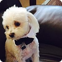 Adopt A Pet :: Milo - Cotati, CA