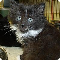 Adopt A Pet :: SPADE - Acme, PA