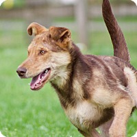 Adopt A Pet :: Mahershala Ali - Jersey City, NJ