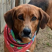 Adopt A Pet :: JEMISON - Albany, NY