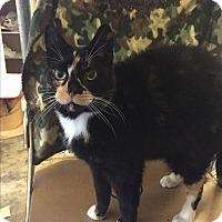 Adopt A Pet :: Darla - Plattekill, NY