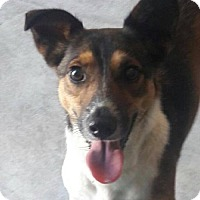 Adopt A Pet :: Twix - Huntington Woods, MI