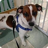 Adopt A Pet :: BARNEY - Cleveland, TN