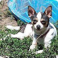 Adopt A Pet :: Leija - ST LOUIS, MO