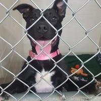 Adopt A Pet :: Betty - Manitowoc, WI