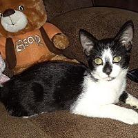 Adopt A Pet :: Zane - Delray Beach, FL