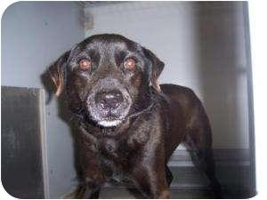 Terrier (Unknown Type, Medium) Mix Dog for adoption in Olathe, Kansas - Jinny