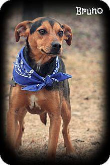 Hound (Unknown Type) Mix Dog for adoption in Glastonbury, Connecticut - BRUNO