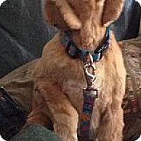 Adopt A Pet :: Heidi - Ottawa, ON