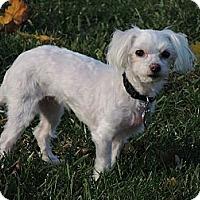 Adopt A Pet :: Gracie - Mt Gretna, PA